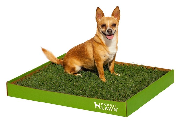 5. DoggieLawn Disposable Dog Potty - Real Grass - Large 24x21